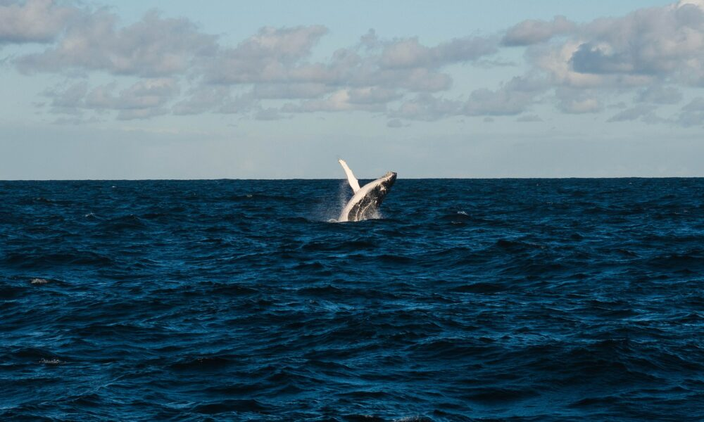 Corsair DeFi har til formål at kaste hvaler i land